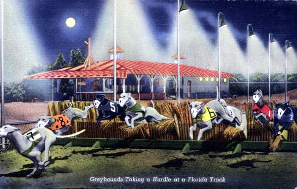 greyhounds-taking-a-hurdle.-1940-postcard