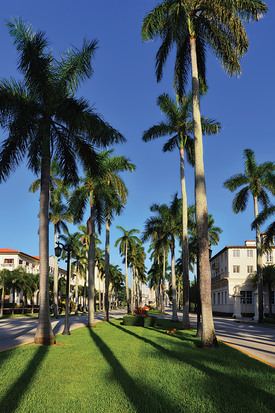 Beautiful palm trees at famous Royal Palm Way, Palm Beach, Florida, United States.