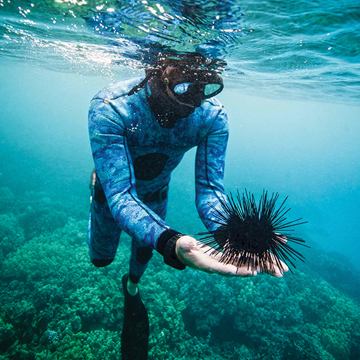 Freedivers get acquainted with an echinoderm. Photograph by Immersion Freediving
