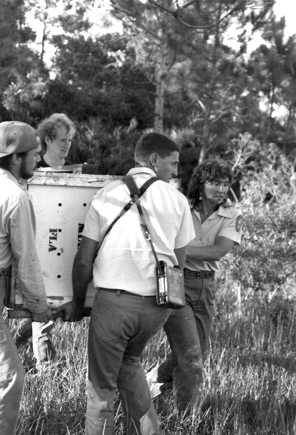 Roelke and her team preparing to release a panther in 1987; Photograph by Florida Game and Fish Commission