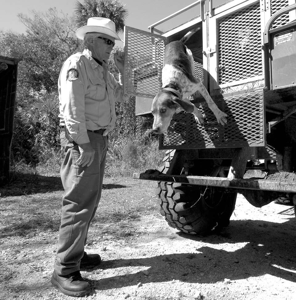 Roy McBride brought specially trained Walker fox-hunting hounds to South Florida and turned them loose to find panthers. Photograph by Tim donovan for FWC