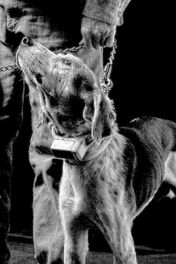 McBride's tracking dog; Photograph by Connie Bransilver