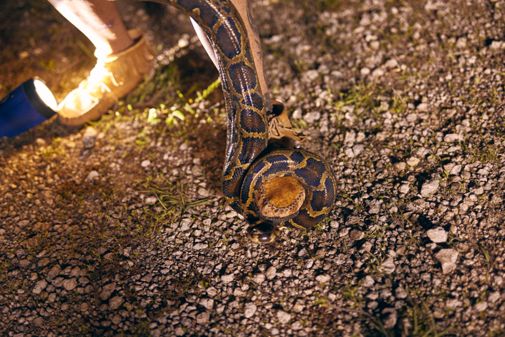 Anne Gorden-Vega's mocassins are illuminated by a flashlight at her foot. A skinny python is coiled around her leg.