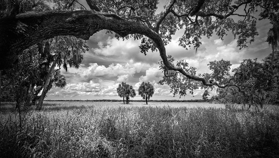 Butcher was taken with this view of the grassland in Myakka River State Park. Photography by Clyde Butcher