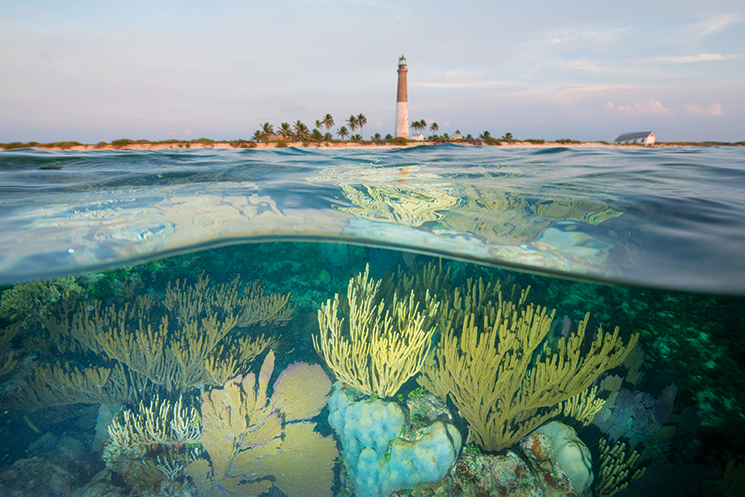 Reef at Loggerhead Key; Photography by Carlton Ward Jr.