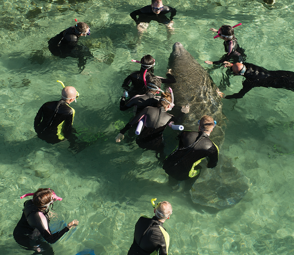 Tourists participate in a guided encounter with manatees in Three Sisters Springs in Crystal River; Photography by Carlton Ward