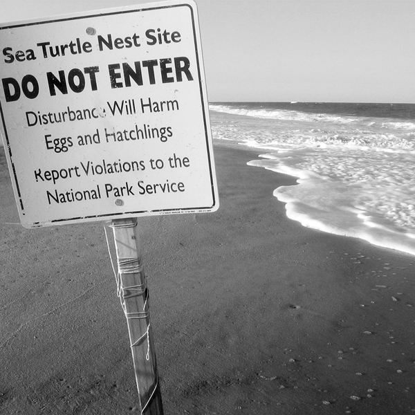 Take the turtle nesting site signage seriously—it's no joke. Photography by Evgeny Savin/Adobe Stock