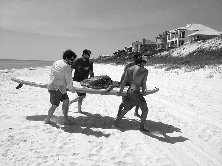 Saving a sick or stranded adult loggerhead is one of the many rescue efforts of the South Walton Turtle Watch Group, which works with the FWC. Photography by South Walton Turtle Watch Group