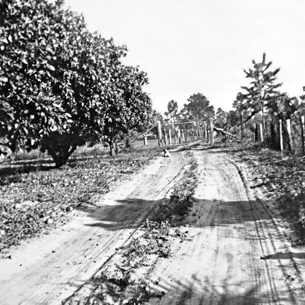 A vintage photo of the site where Pilgrimage Plantation once stood;