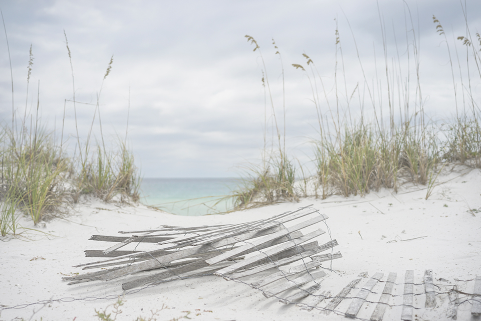 Post Hurricane Matthew, Floridians were saddened to discover storm-wrought landscapes at their local beaches. Photography by Adobe Stock Forestpath