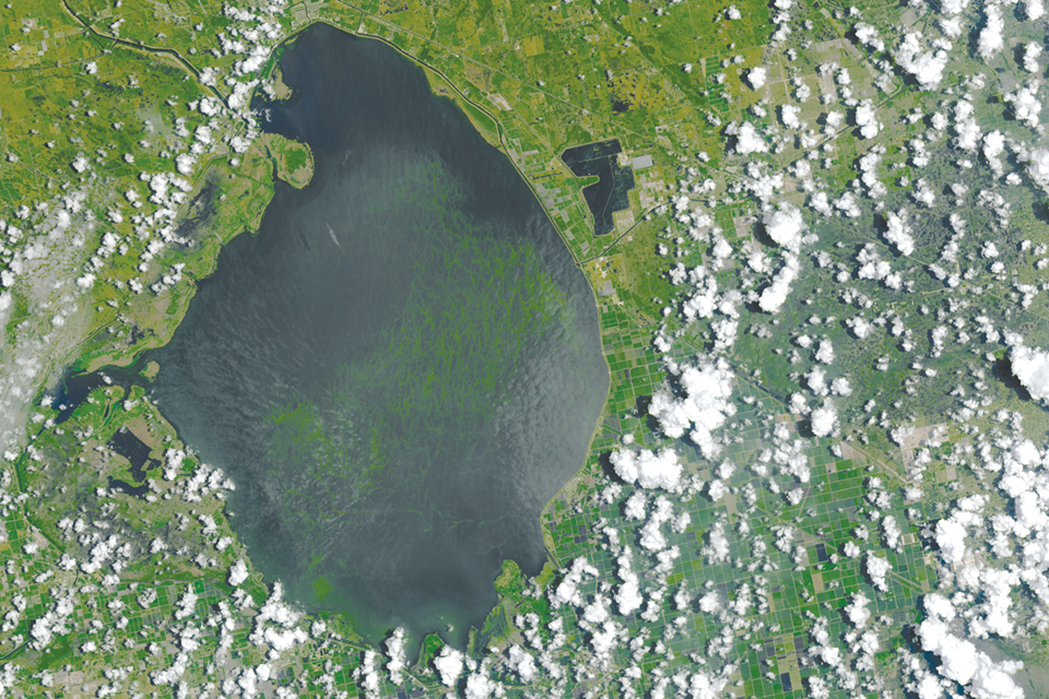 Lake Okeechobee in 2016 during a toxic algal bloom that devastated local economies but didn't warrant FEMA aid. Photography by NASA Earth Observatory image by Joshua Stevens