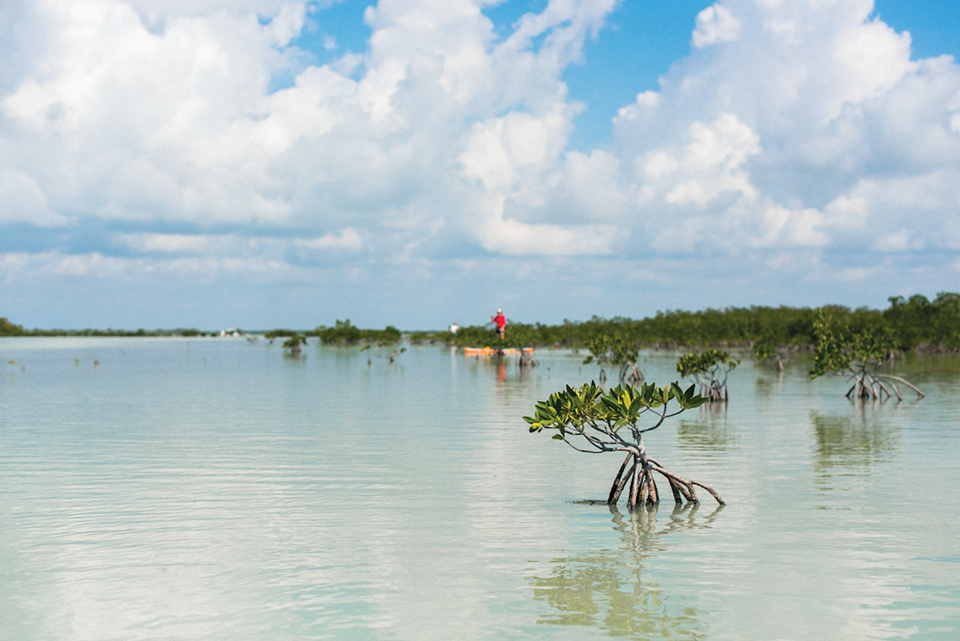 On the sawfish expedition, searching in the shallows for the toothsome creatures; photography by Desirée Gardner