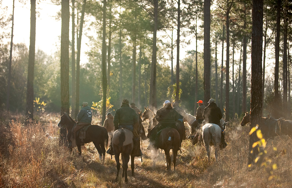 Riders head out on an early winter morning in search of wild quail on Chinquapin Farm near Lake City