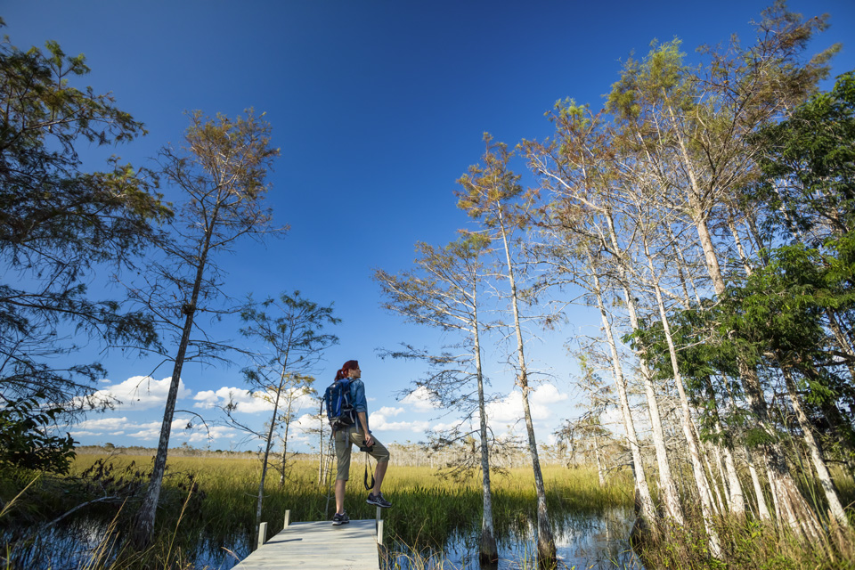 Hiker standing amount Trees in the Marsh Trail of the Ten Thousand Islands.