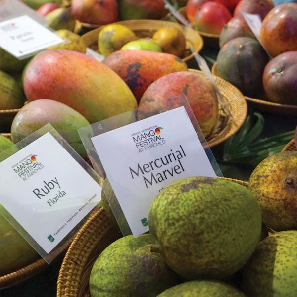 Baskets of mangoes and fruit with their variation labels.