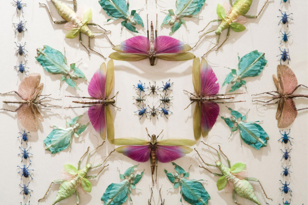 "Jennifer Angus creates patterned ""wallpaper"" using exotic, dried insects"