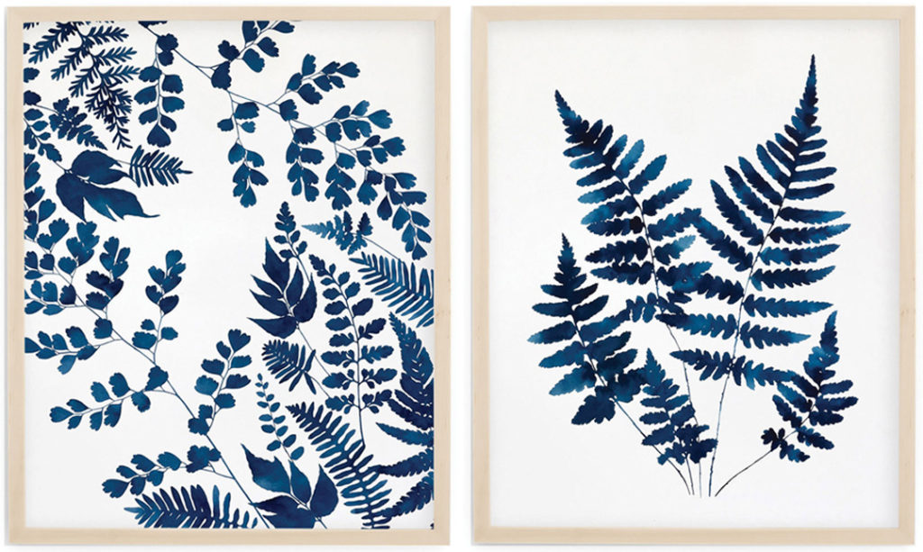 Balance and Shield Ferns watercolors by Jenny Kiker
