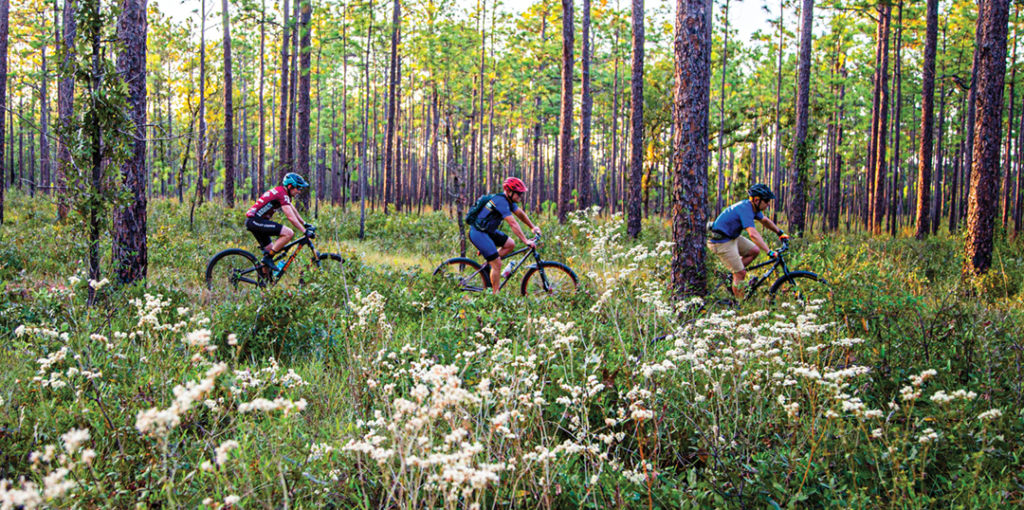 3 bikers on a trail surrounded with brush and pine trees.