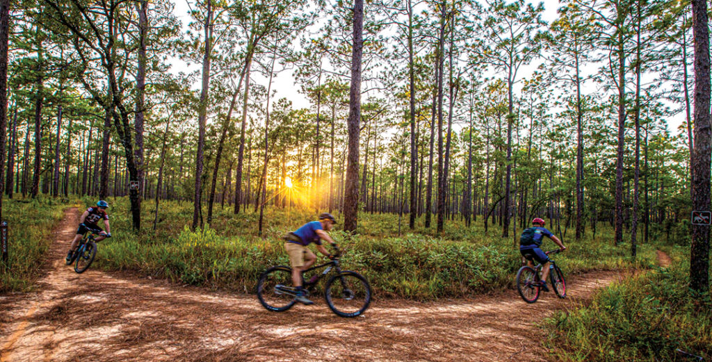 Bike riders on a trail through a pine forest.