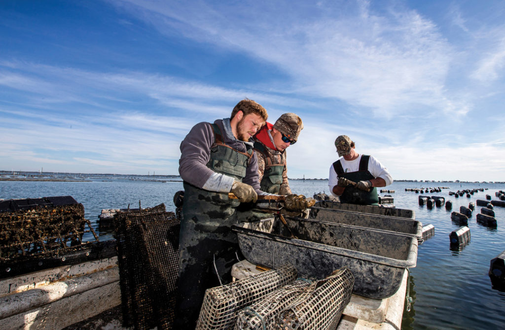 Oyster Fishers